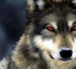 Povestea celor doi lupi