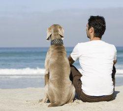 Dependenta emotionala de animalul de companie