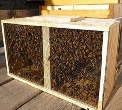 Roi de albine la pachet pentru iubitorii de albine