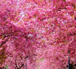 Duminica floriilor ! La multi ani de florii !